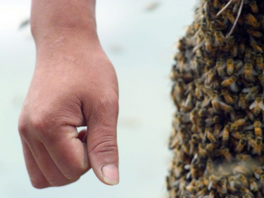 Film still of yuyu by marc Johnson in Chongqing China featuring she zuo bin (She Ping) covered by bees